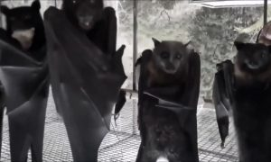 Bats Hanging Out